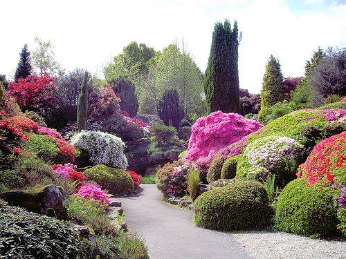 Quais tipos de arbustos floridos desenvolvem-se bem em solos úmidos