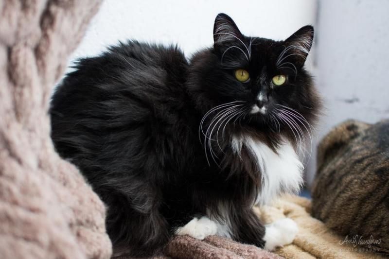 Adopt Whumpy On With Images Cat Adoption I Love Cats Pets