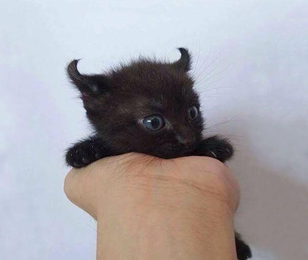 Little Evil But Still Cute Kitty Kittens Cutest Cutest Kittens Ever Cute Baby Animals