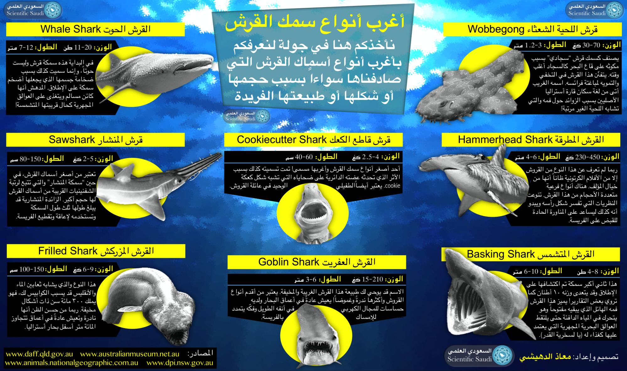 أنواع سمك القرش Shark Shark S Goblin Shark