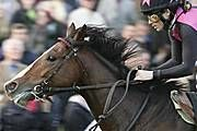 """Munich based thoroughbred """"LORD EMERY"""" (trained by Michael Figge)"""