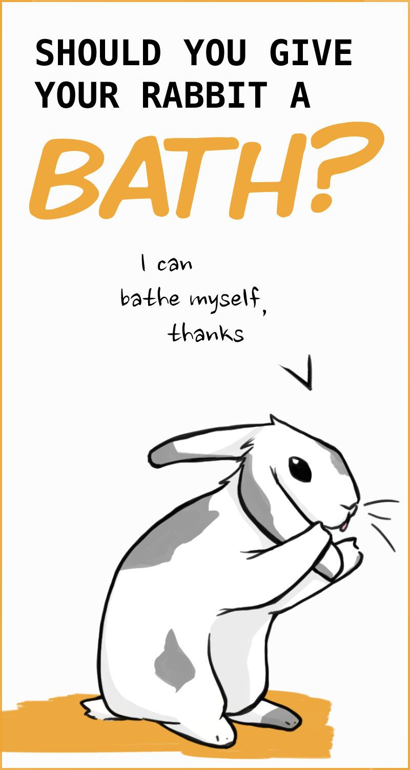 Learn Why Baths Are So Dangerous For Rabbits And What Alternatives
