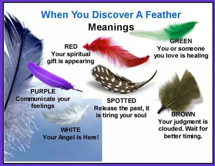 Feather Meanings Spells O Pinterest Feathers Dream Catchers