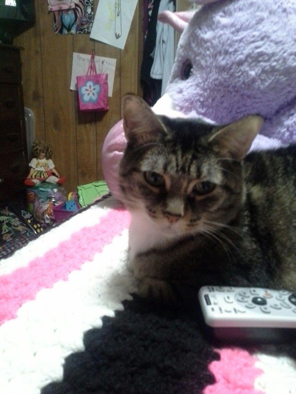 Free Kittens Near Me Now Craigslist