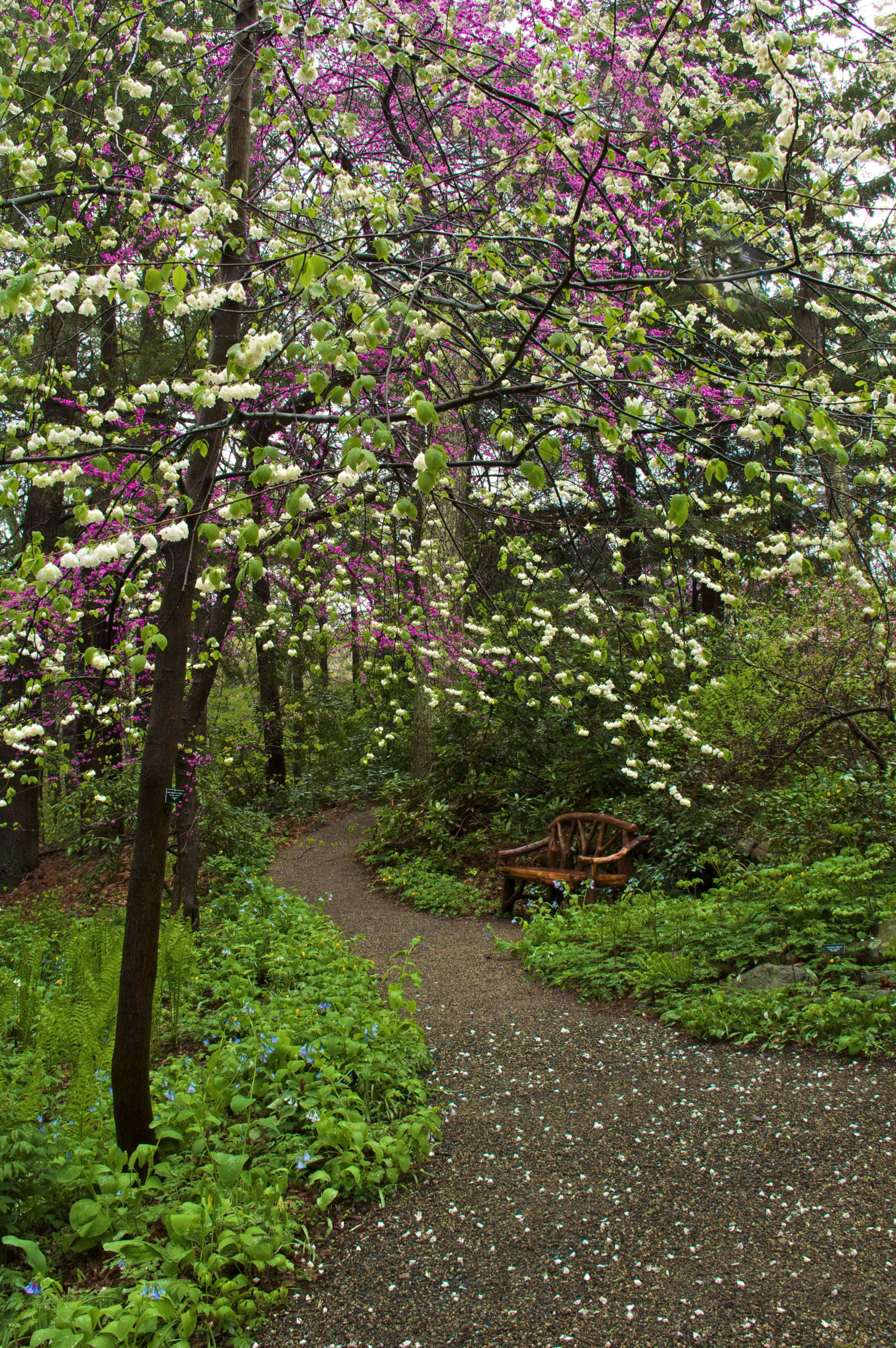 The New Shade Garden: Creating a Lush Oasis in the Age of Climate ...