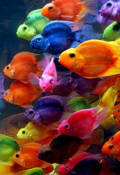 Pecera, peces de colores