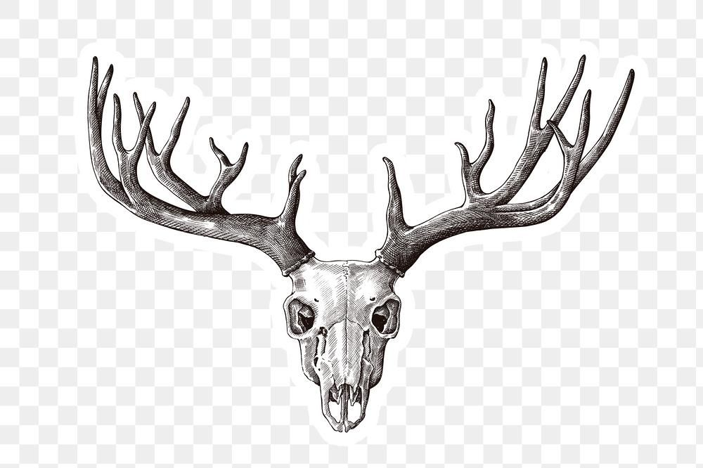 Hand Drawn Deer Skull With Antler Sticker With A White Border Design Element Free Image By Rawpixel Com Hein Antler Design Deer Skulls Skull Illustration