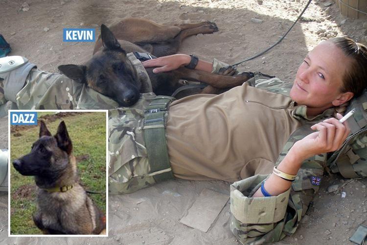 Hero army dogs face being put down despite saving