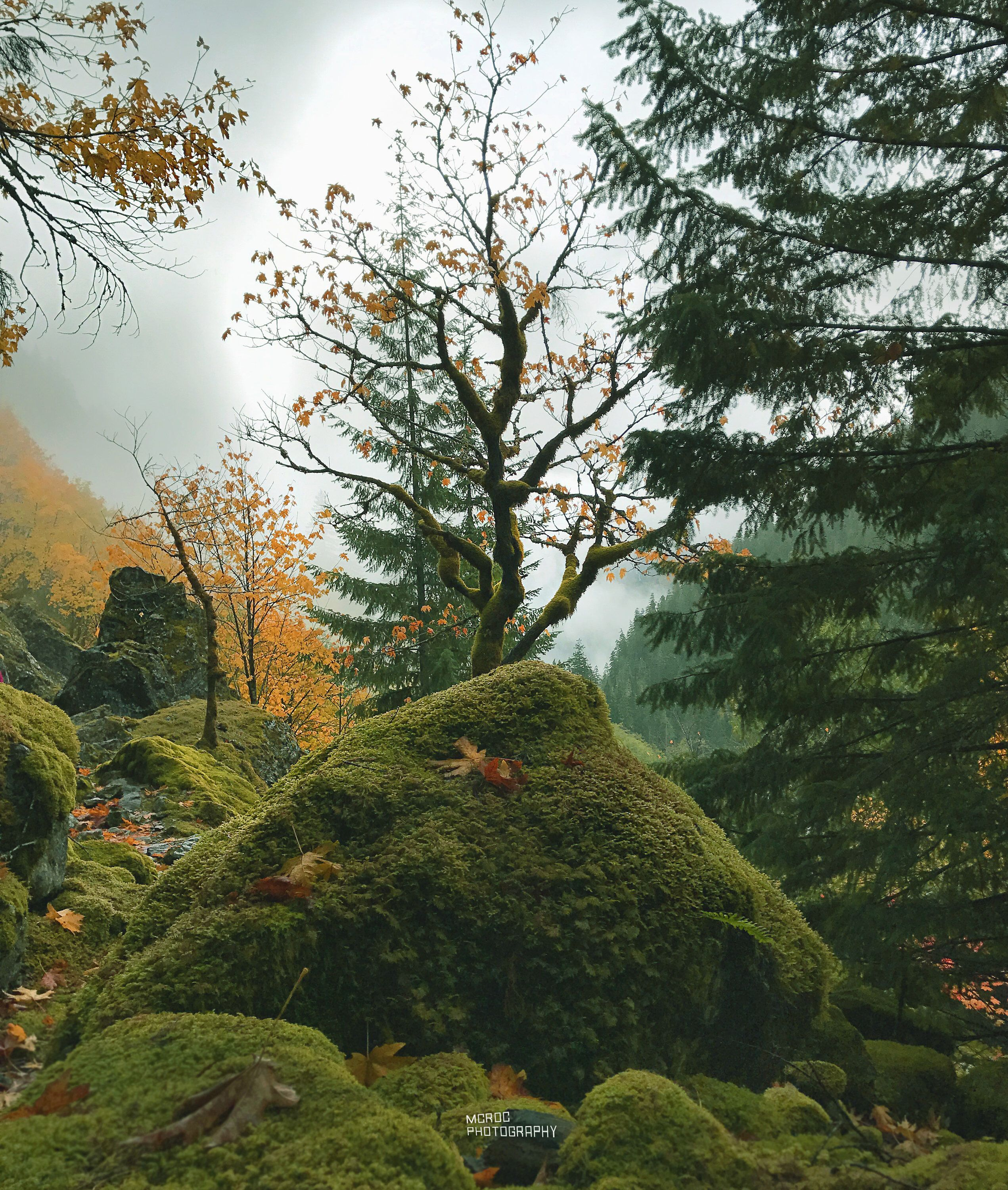 Mythical Glen Mossy Rocks And Trees Mountain Landscape Twisted Tree Photo Fi Nature Photography Beautiful Photography Nature Photography Inspiration Nature
