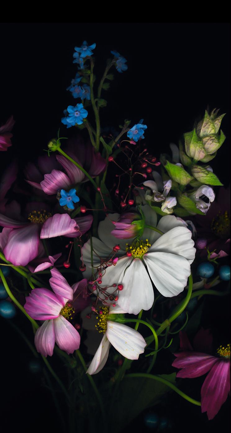 Iphone 6 Plus Wallpapers Flowers Flower Flowers Wallpaper