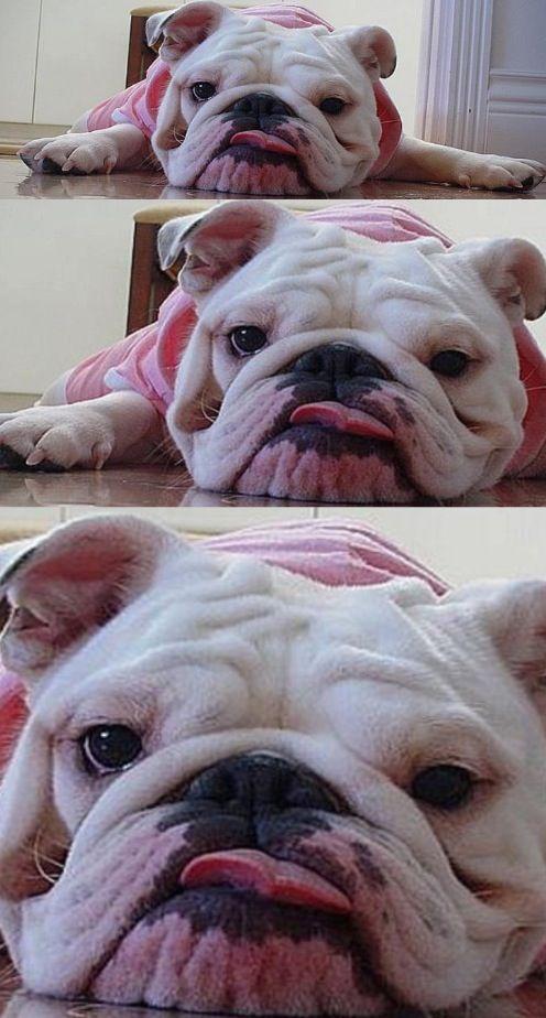 Her Face Cracks Me Up So Cute Bulldog Bulldog Puppies Cute
