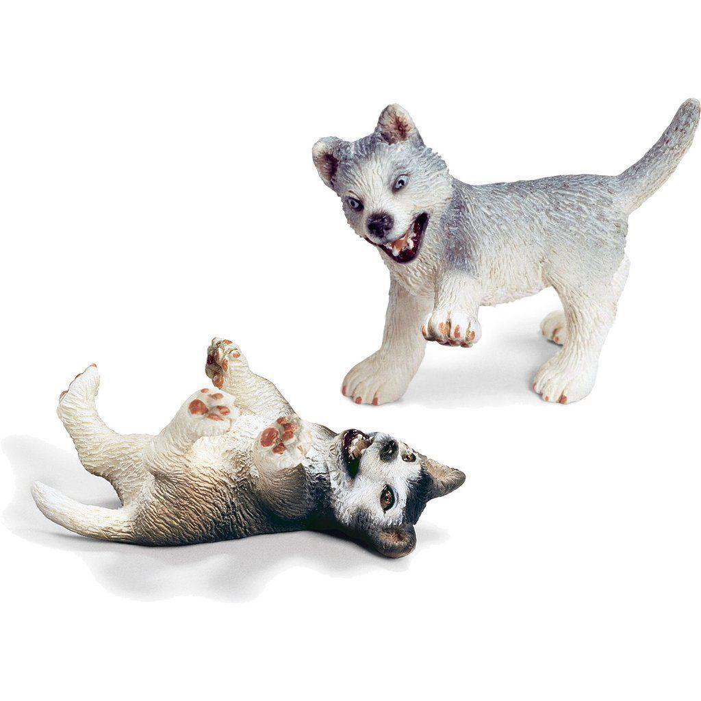 Miniature - Husky Puppies (Playing/ Fighting) #miniaturehusky Miniature - Husky Puppies (Playing/ Fighting) #miniaturehusky Miniature - Husky Puppies (Playing/ Fighting) #miniaturehusky Miniature - Husky Puppies (Playing/ Fighting) #miniaturehusky Miniature - Husky Puppies (Playing/ Fighting) #miniaturehusky Miniature - Husky Puppies (Playing/ Fighting) #miniaturehusky Miniature - Husky Puppies (Playing/ Fighting) #miniaturehusky Miniature - Husky Puppies (Playing/ Fighting) #miniaturehusky Mini #miniaturehusky