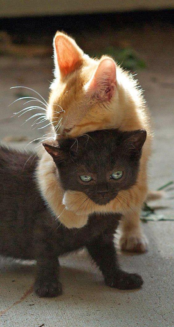 Yavru Kediler Sevimli Hayvan Yavrulari Sevimli Kediler Yavru Kediler