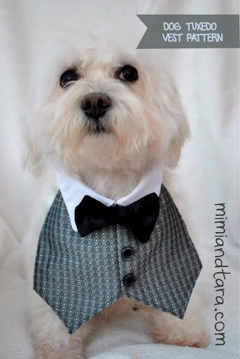 Pin by Megan watson on Dog wedding | Pinterest | Dog, Pet clothes ...