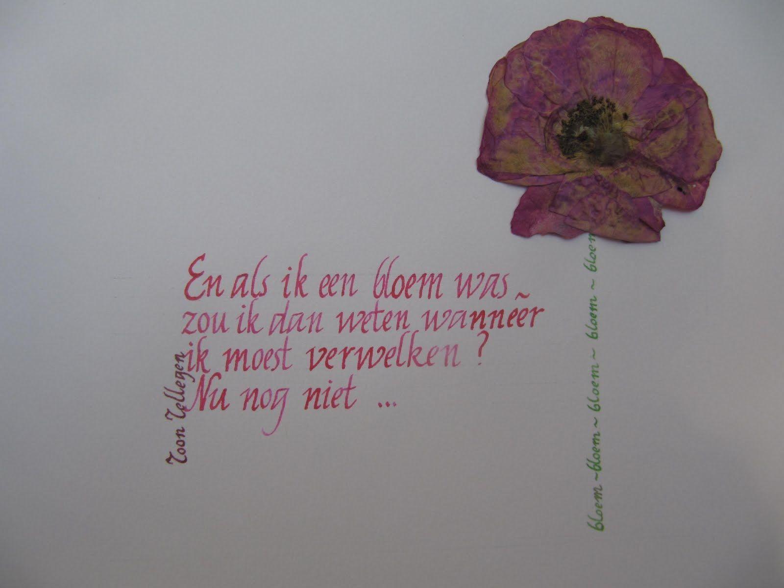 Als Ik Een Bloem Was Mooie Teksten Gedichten Citaten En