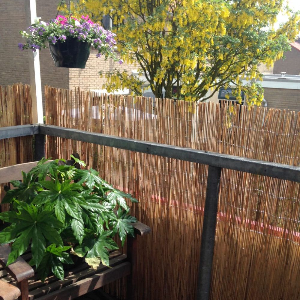 Reed Fence Roll 600 x 180 cm in 2020 Natural fence