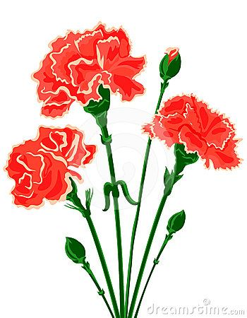 Red Carnation Clipart Carnation Flower Clip Carnations