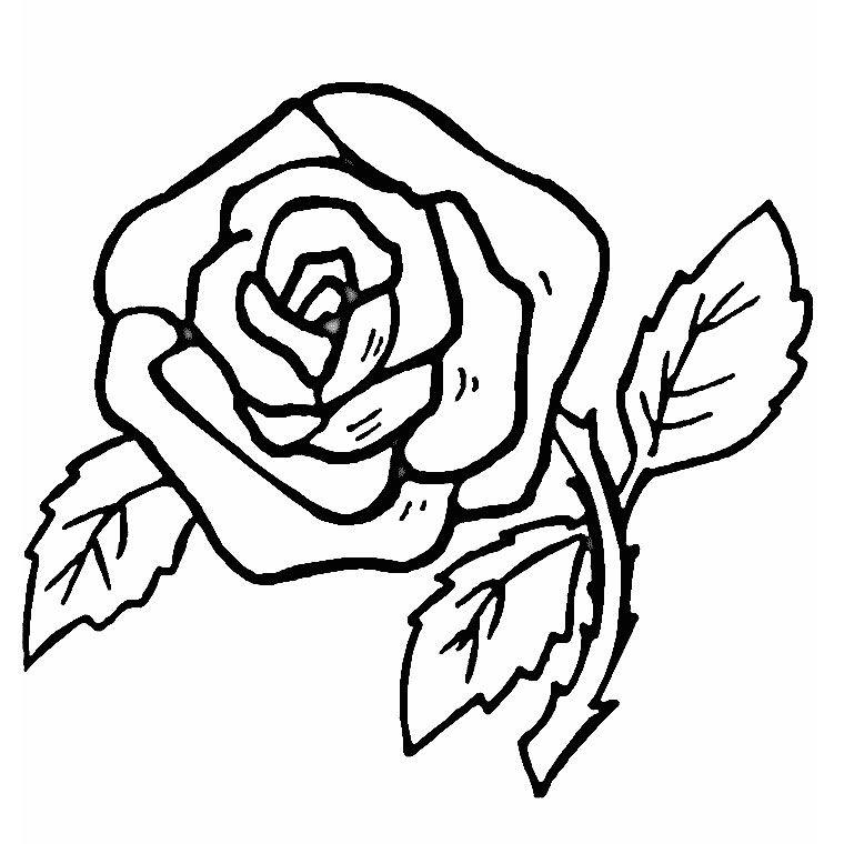 Top Coloriage Rose - image 5 | Idées pour la maison | Pinterest  PG57