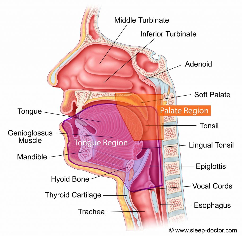 Image Result For Scontent Vocal Tract Studio Pinterest