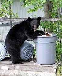To many bears roaming the city.