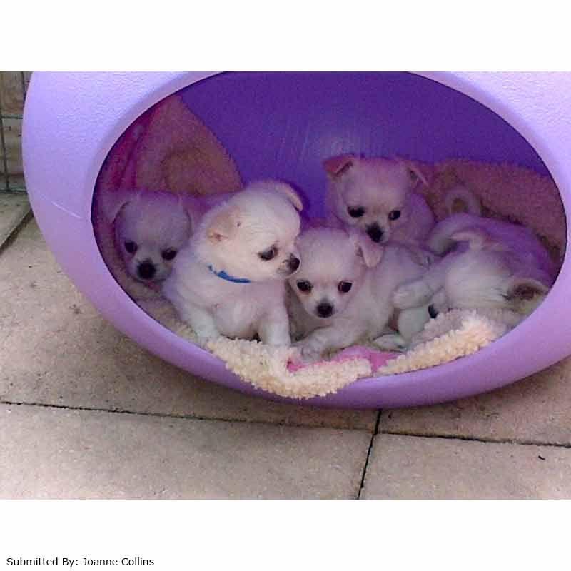 Pet Pod House By Petplanet On Sale Free Uk Delivery Petplanet Co Uk Pet Pods Pod House Pet Safe