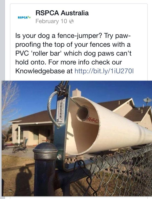 Active Link Doesn T Work But Great Solution To Dogs That Are Fence Climbers Pvc On Cable Across Top Of Fence Ro Cheap Dog Kennels Dog Enclosures Diy Dog Run