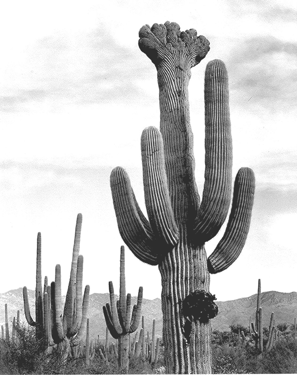 Photographer and environmentalist Ansel Adams is famous for his ...