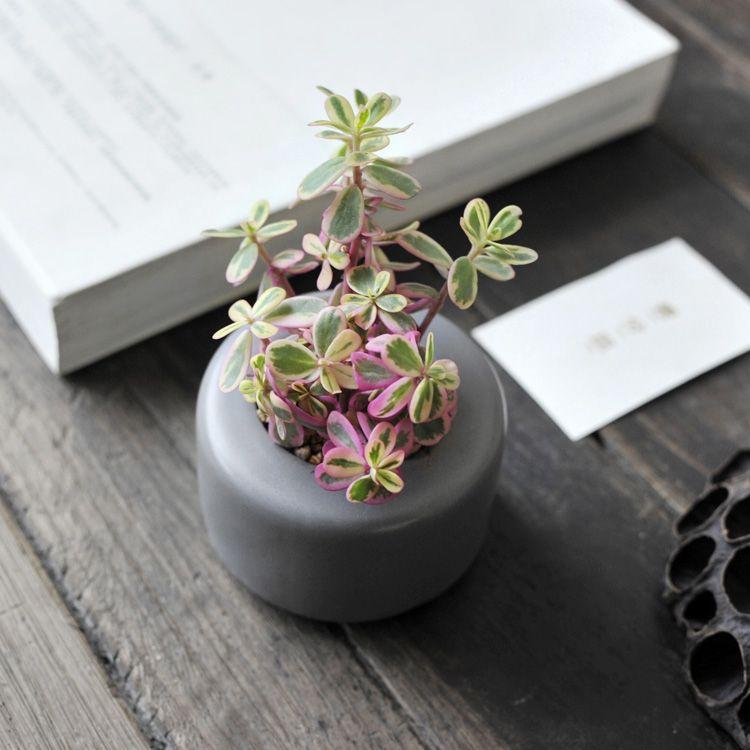 Aliexpress.com : Buy Garden Supplies Mini Garden Flowers Pots Planters  Colors Ceramic Office Home