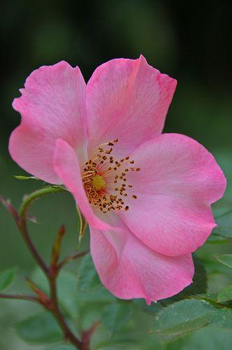 Dsc 5456 Take A Bow Beautiful Flowers Flowers Amazing Flowers