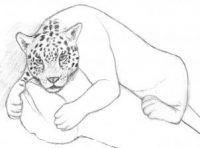 jaguar-zeichnen-schritt-fuer-schritt-dekoking-com-4