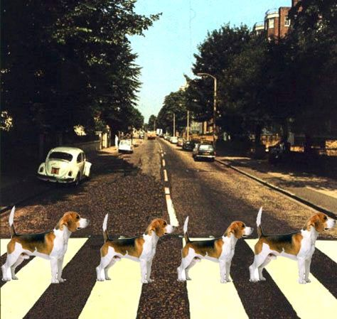 The Beagles Doggy Road Album Cover Beagle Puppy Beagle
