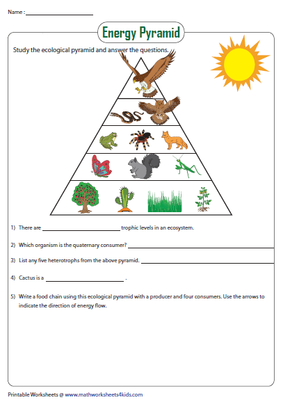 Energy Pyramid Worksheet Food Chain Energy Pyramid Science Crafts