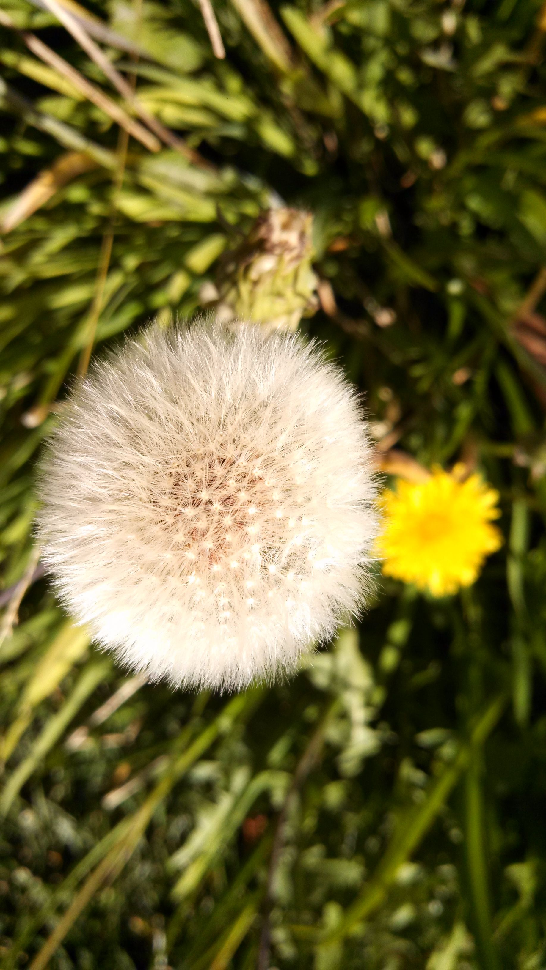 Pin By Tangerine Buttercup On The Elusive Windmill Dandelion Macro Photography Nature Photography