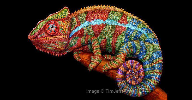 Tim Jeffs, chameleon, colored pencil