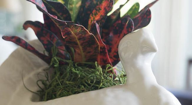 How to Create a Living Centerpiece for Thanksgiving