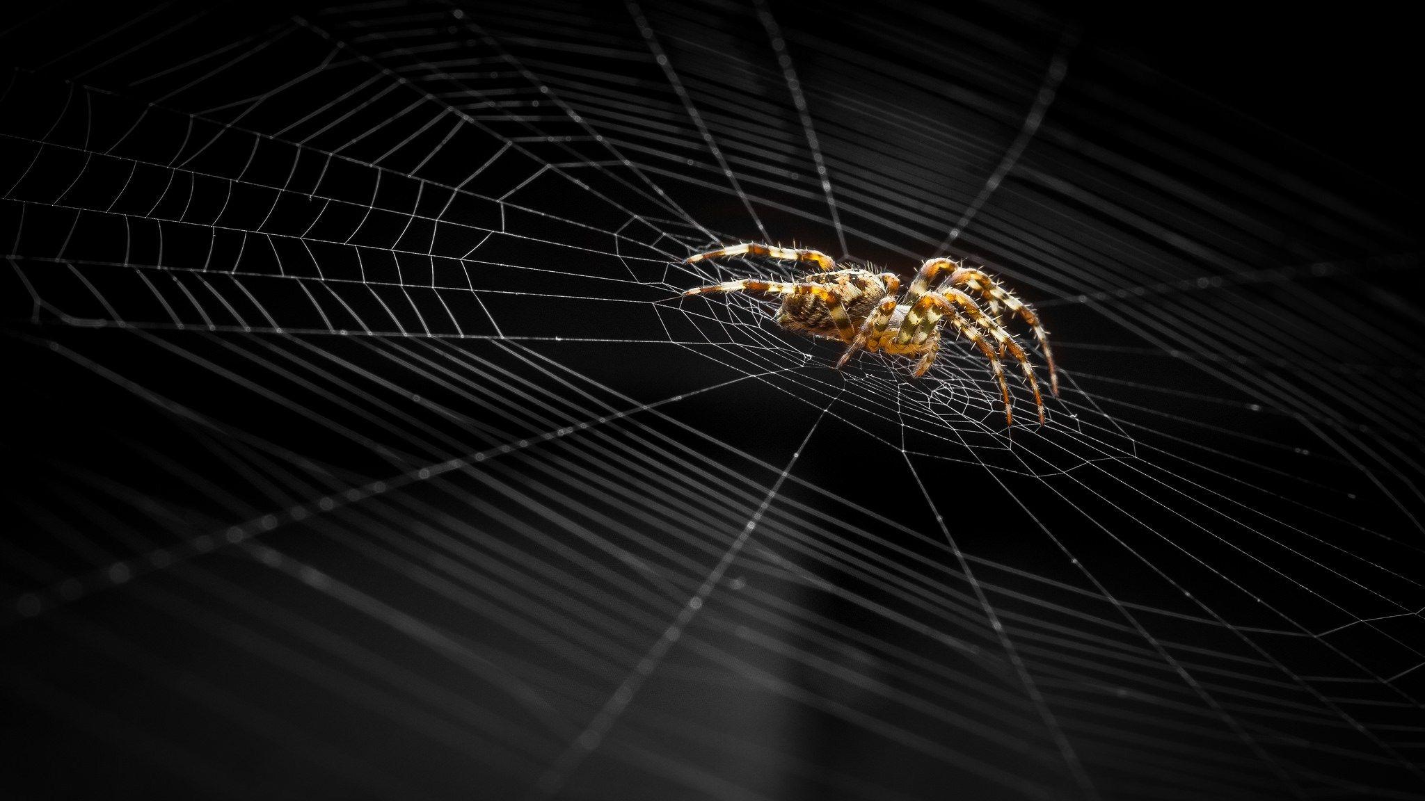 Download Wallpaper Halloween Spider - f990a74189d2571e94eb7b800f63c879  HD_55312.jpg