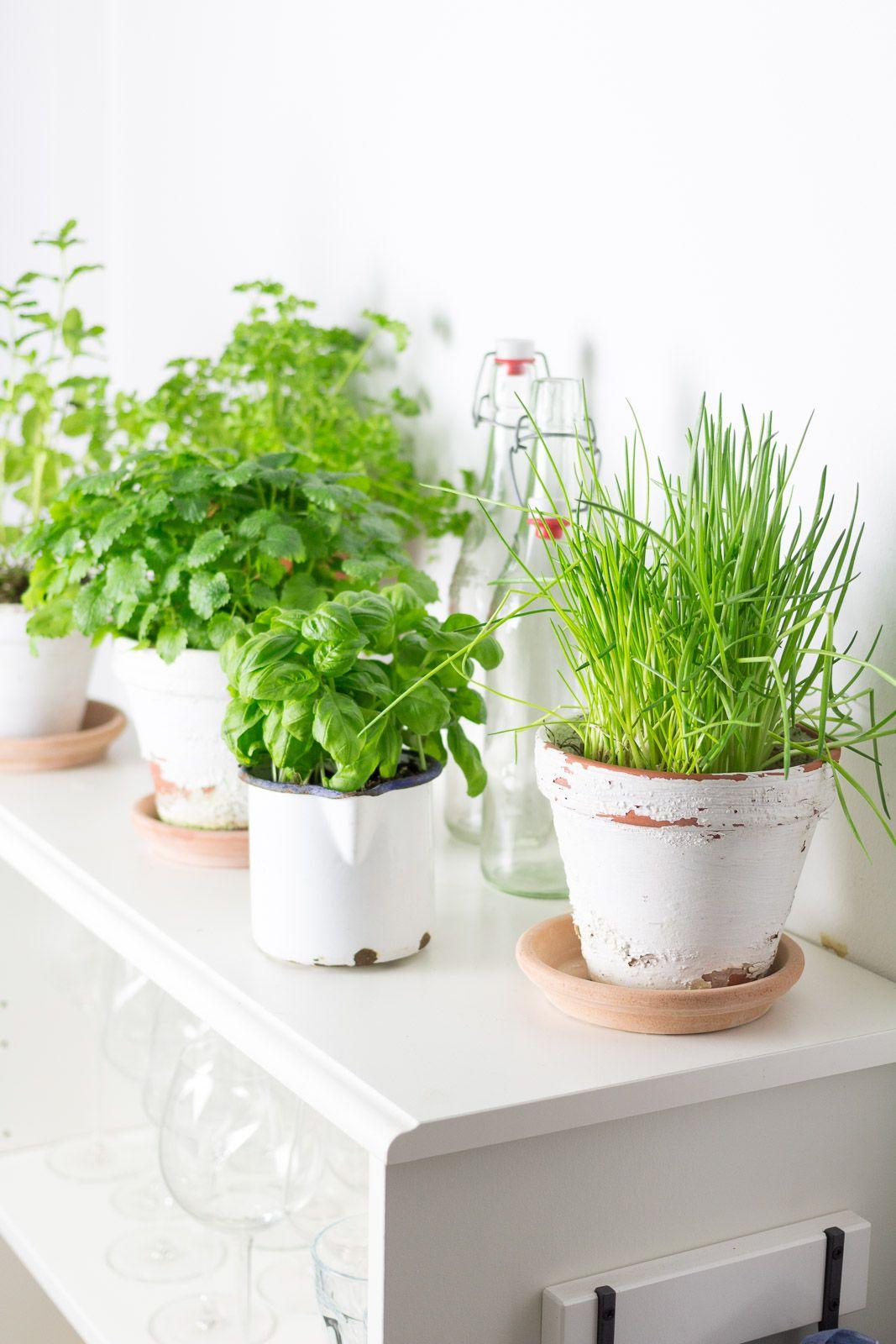 Zimmerpflanzen Fräulein Teil 2: Der Küchengarten | Garten