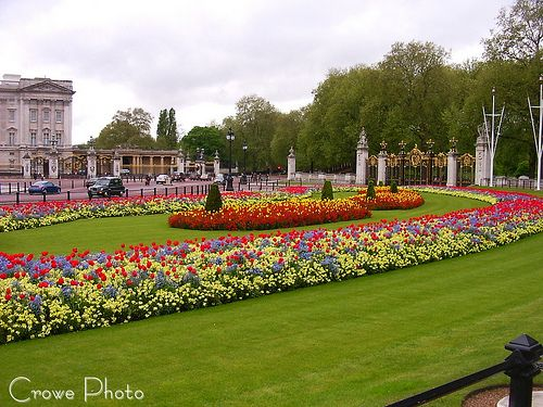 Buckingham Palace's Gardens Include The National Collection Of Which Plant