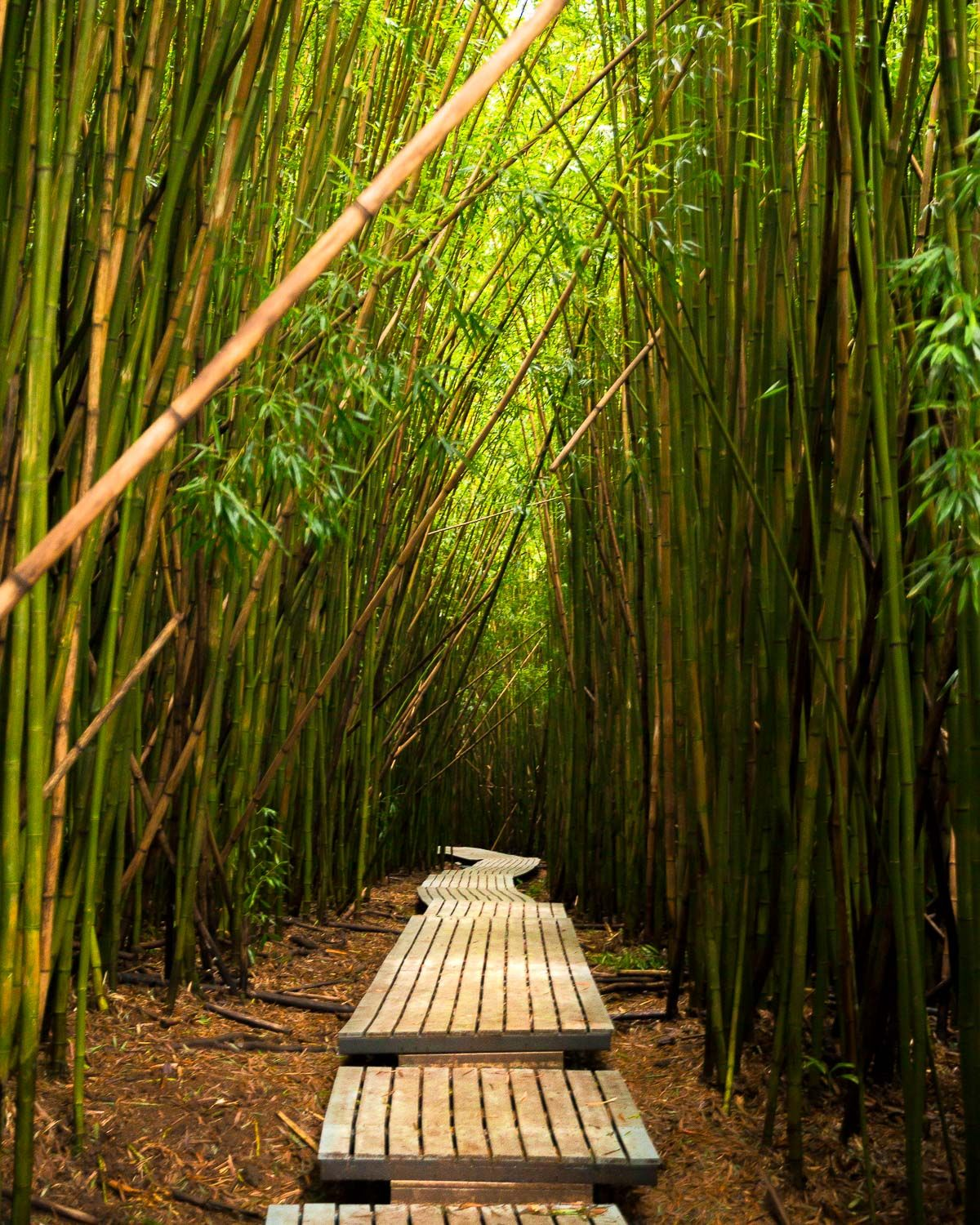 Discovering The Bamboo Forest & Waimoku Falls At Kipahulu
