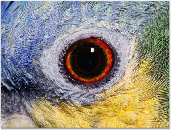 Birds Causes Of Color Birds Eye Birds Puffins Bird