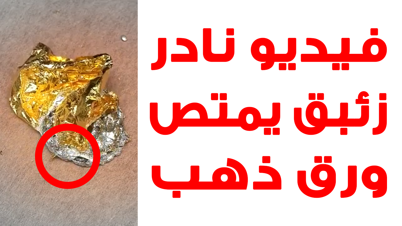 الزئبق الفضي يمتص الذهب أفضل تجربة بمصر Grafixology