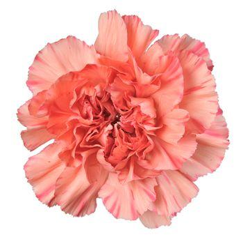 Order Orange Carnation Flowers For Your Wedding Orange Wedding Flowers Carnation Flower Carnations