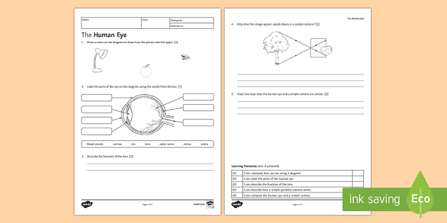 KS3 The Human Eye Homework Activity Sheet - Homework, eye ...