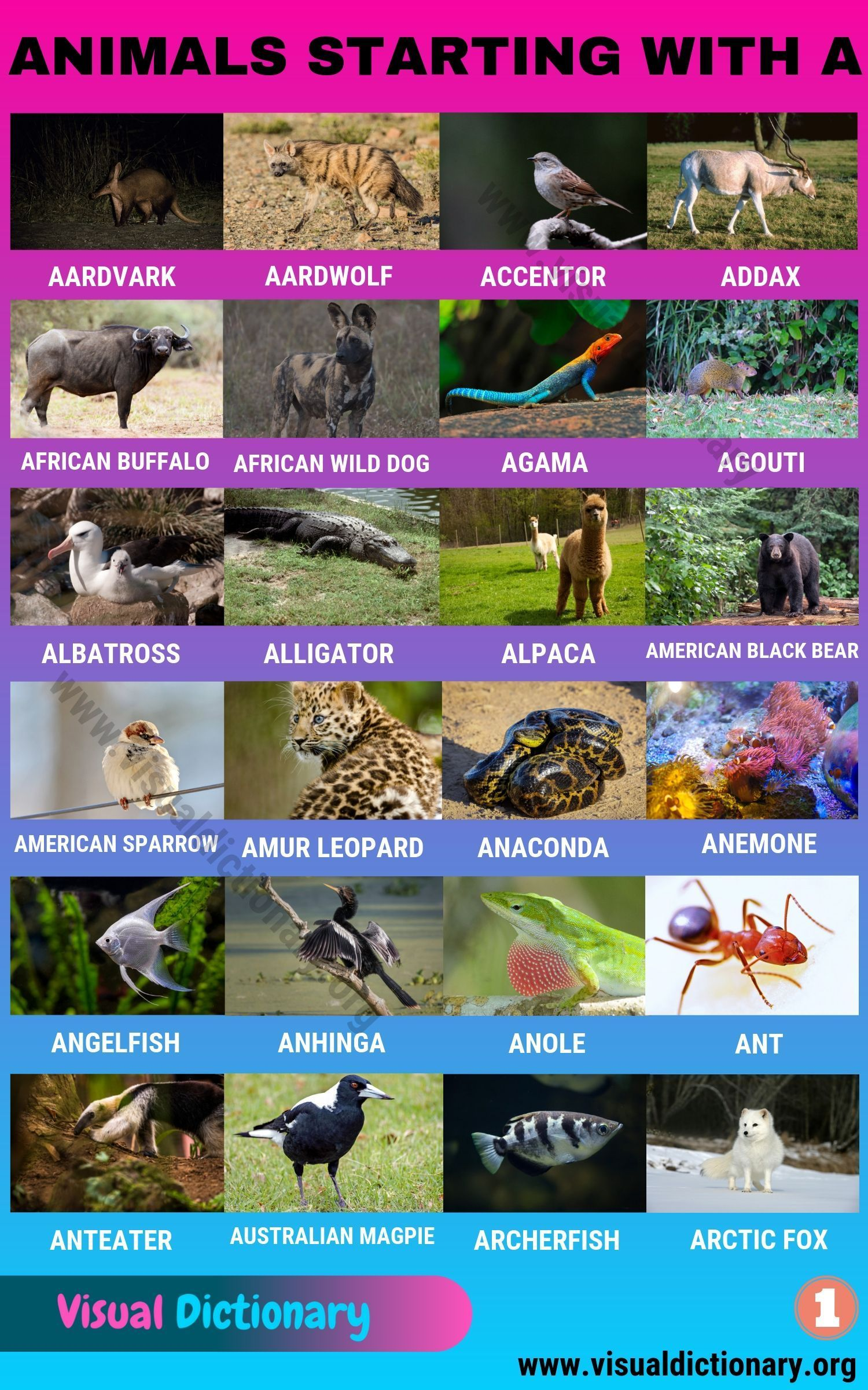 Animals That Start With A Useful List Of 45 Animals Starting With A Visual Dictionary Animals Starting With A Animals Name In English Animals