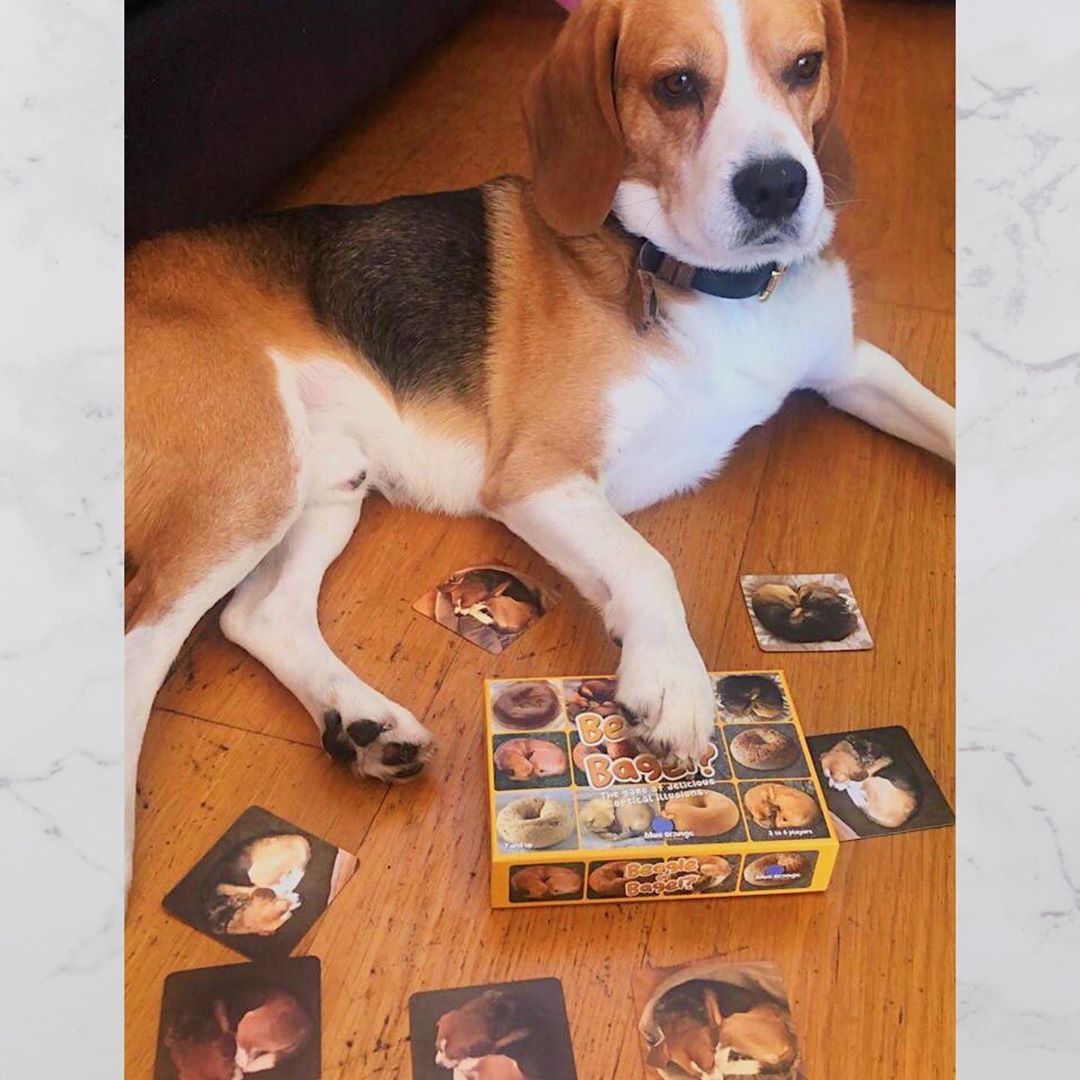 Our New Game Beagle Or Bagel Is Fun For The Entire Family
