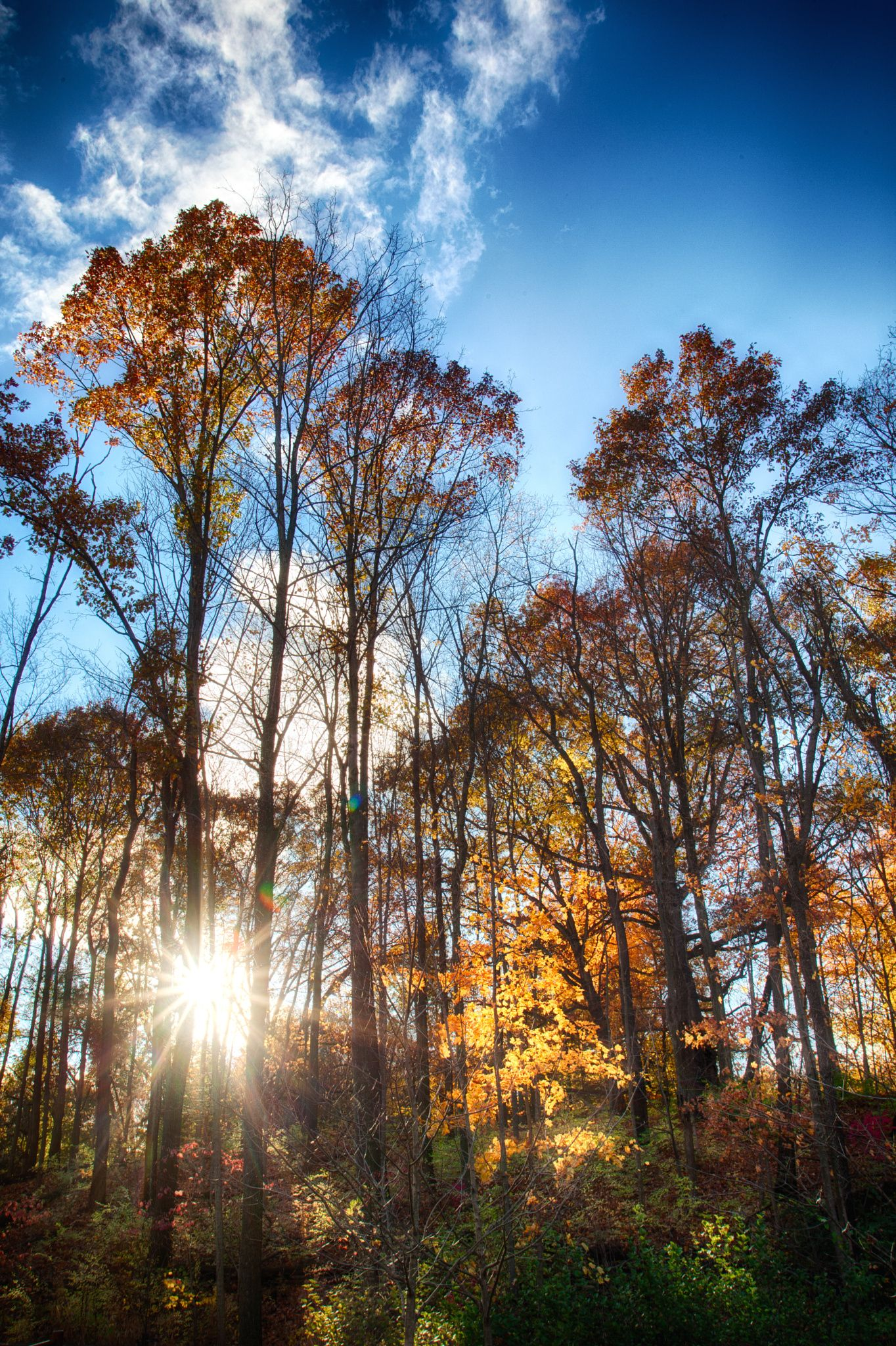 October afternoon in Hills and Dales MetroPark in Dayton Ohio by Jim Crotty