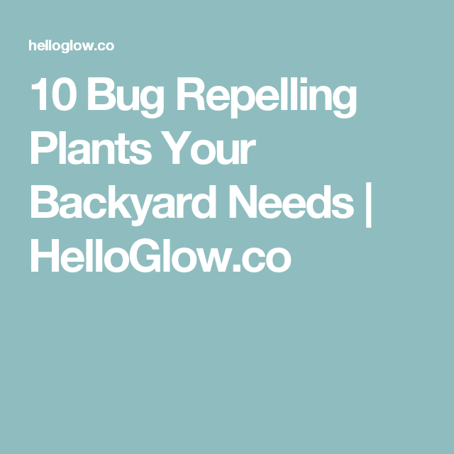 10 Bug Repelling Plants Your Backyard Needs Backyard Plants and
