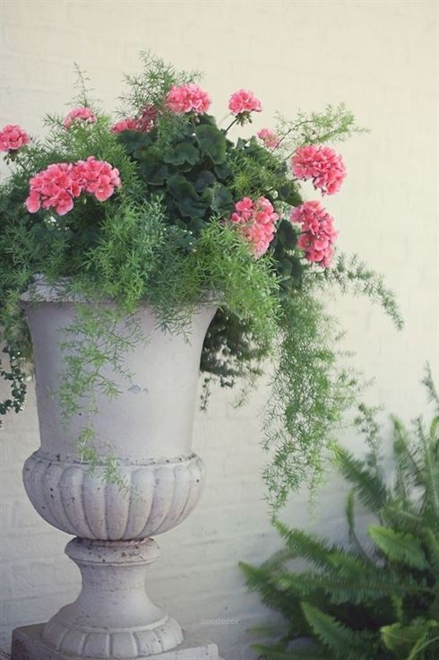 Unbelievable Geranium And Asparagus Fern In A Beautiful Urn Garden Decor For Spring The Post Geranium And Asp Container Flowers Flower Pots Asparagus Fern