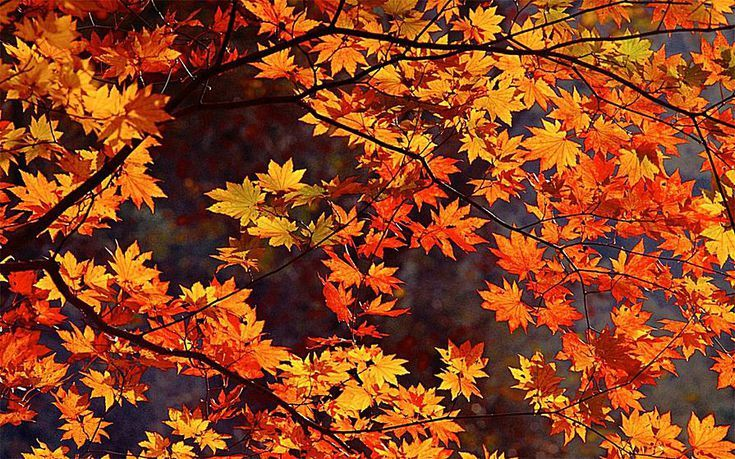 Fall Themed Wallpaper Desktop Pin On Screen Savers
