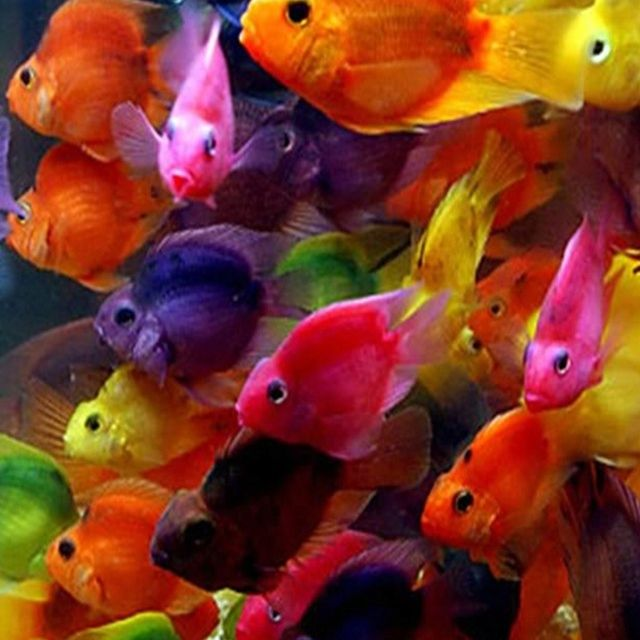 Pin By Edna Gracia On Color Me Pretty Colorful Fish Beautiful Fish Animals Beautiful